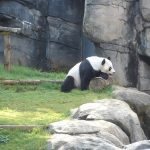 Pandas & Owls & Gorillas, Oh my!