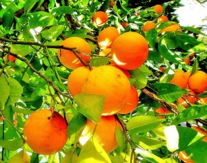 fruit-of-the-spirit-orange-kindness