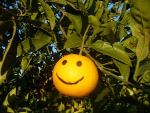 orange-smile-fruit-spirit-kindness