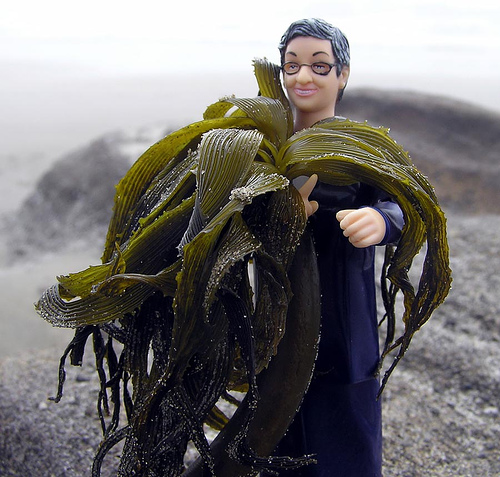 seaweed-bible-costume-halloween