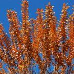 Thanksgiving Leaf Wreaths