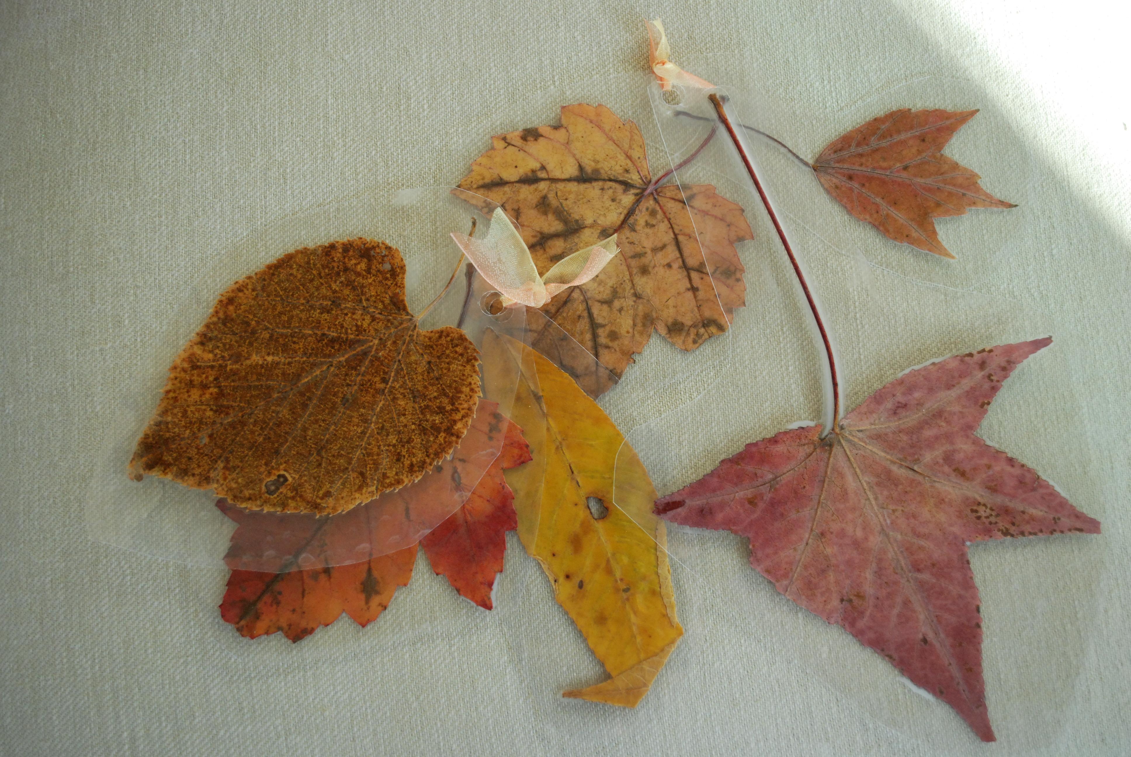 laminated-leaves-autumn