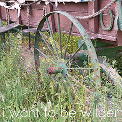 i want to be wilder