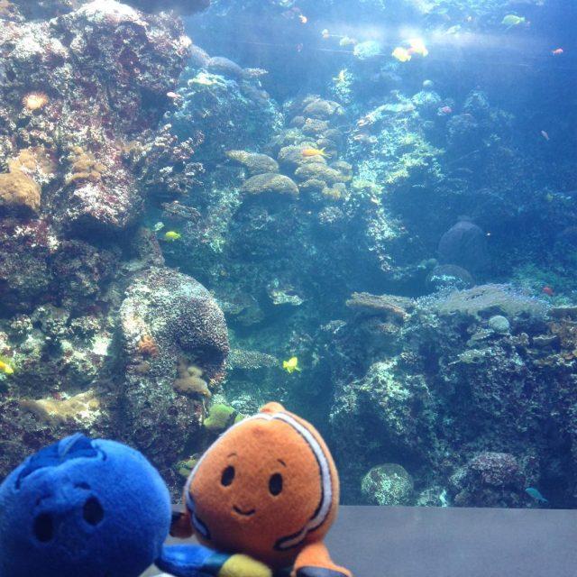 We found Dory and Nemo at the georgiaaquarium today! homeschoolhellip