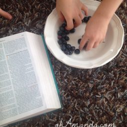 blueberries summer family devotion