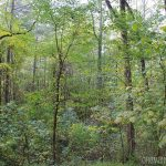 Smells & Trees & Memories