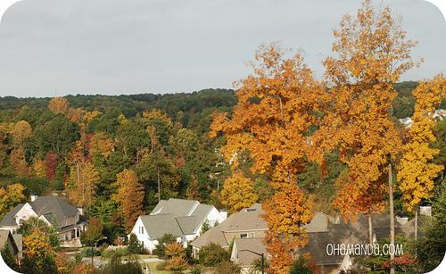 autumn fall scene leaves trees georgia
