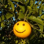Fruit of the Spirit: Kindness & Orange Round Up