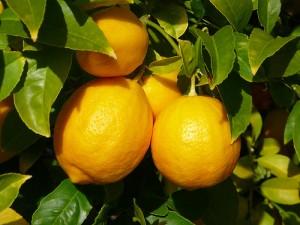 fruit of the spirit lemon faithfulness