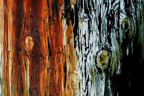 Piling Wood Rust