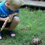 My Turtle Explorer