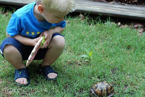 turtle exploration