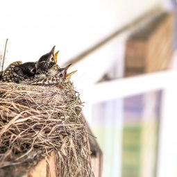 blog photo birds nest