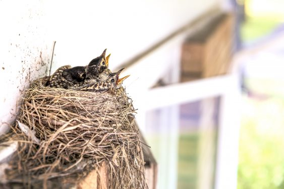 blog photo birds nest